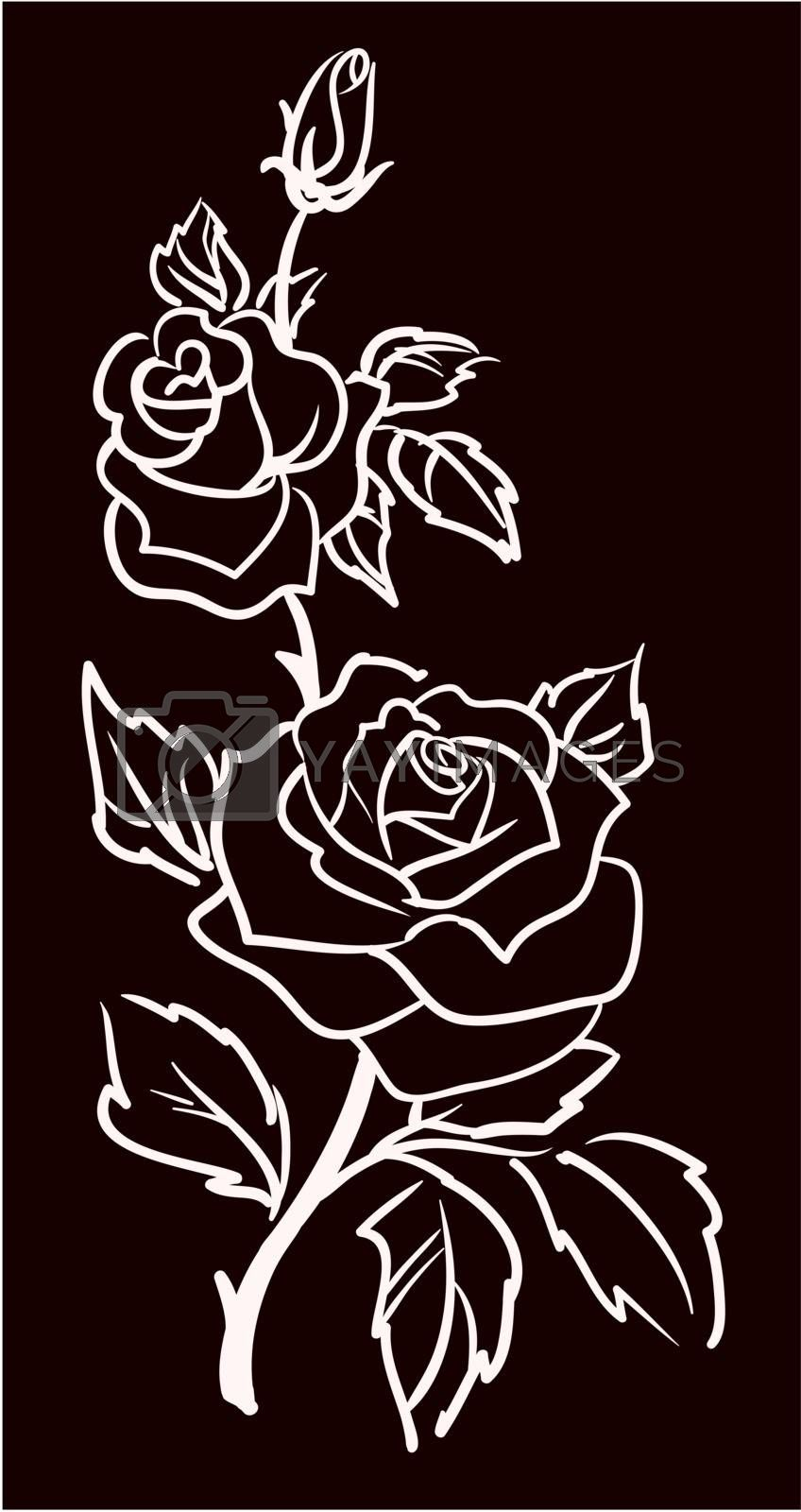 three white roses  isolated on black  background, vector illustration