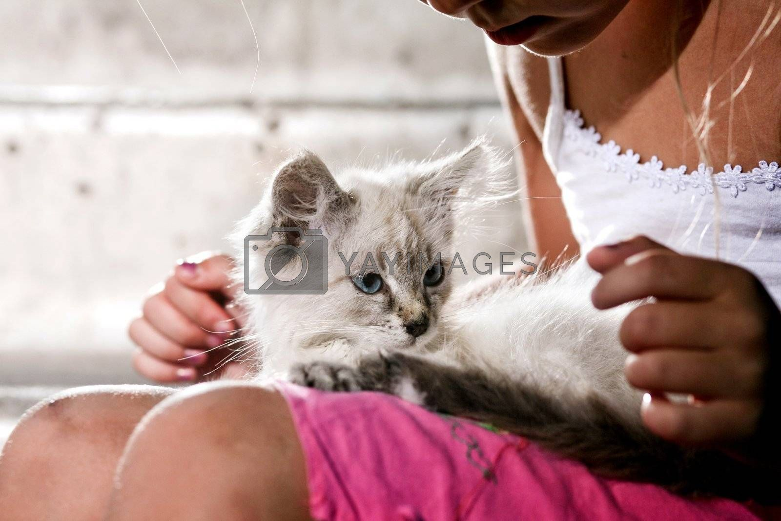 An image a kitten in girls arms