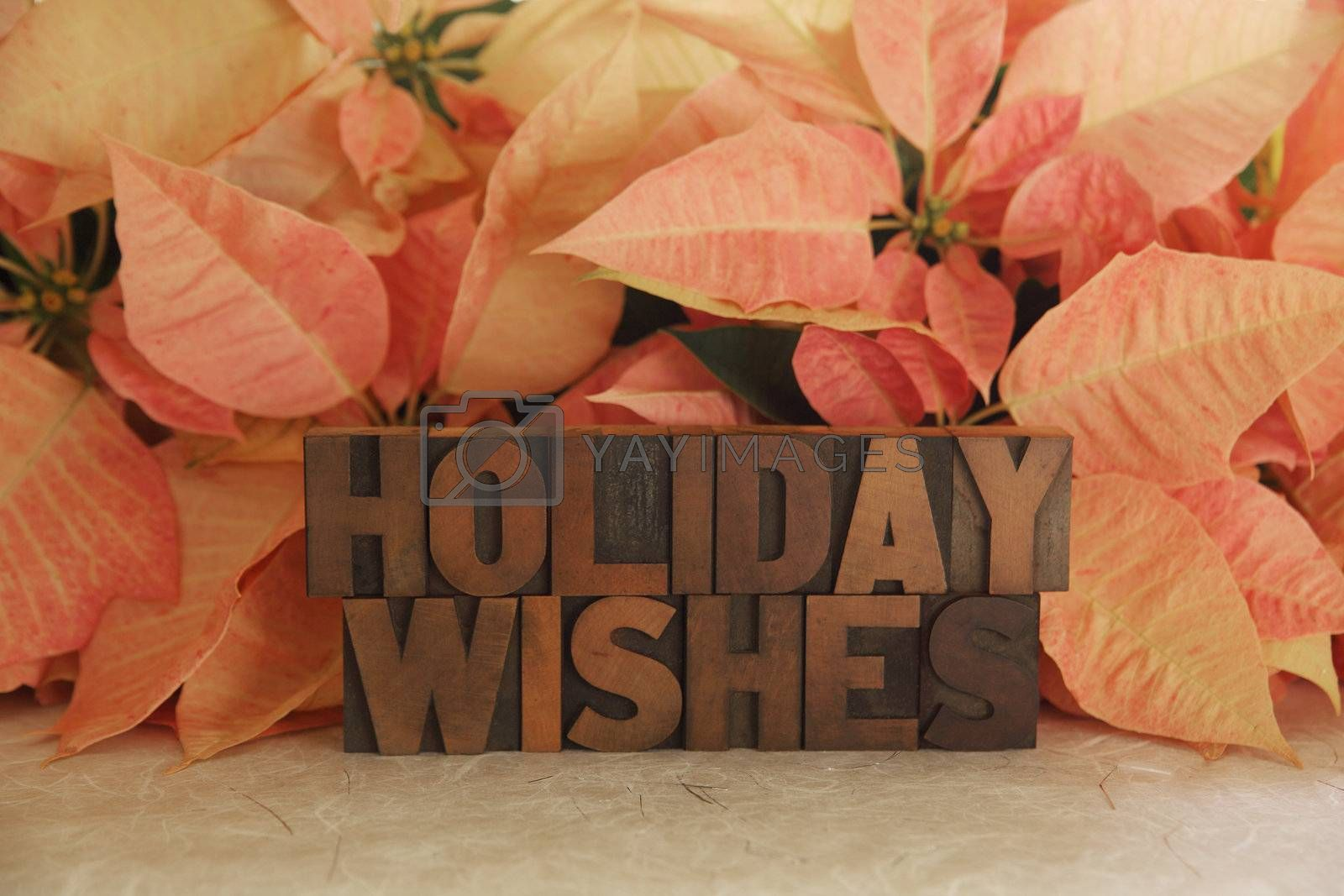 the words Holiday Wishes with pink poinsettias in the background