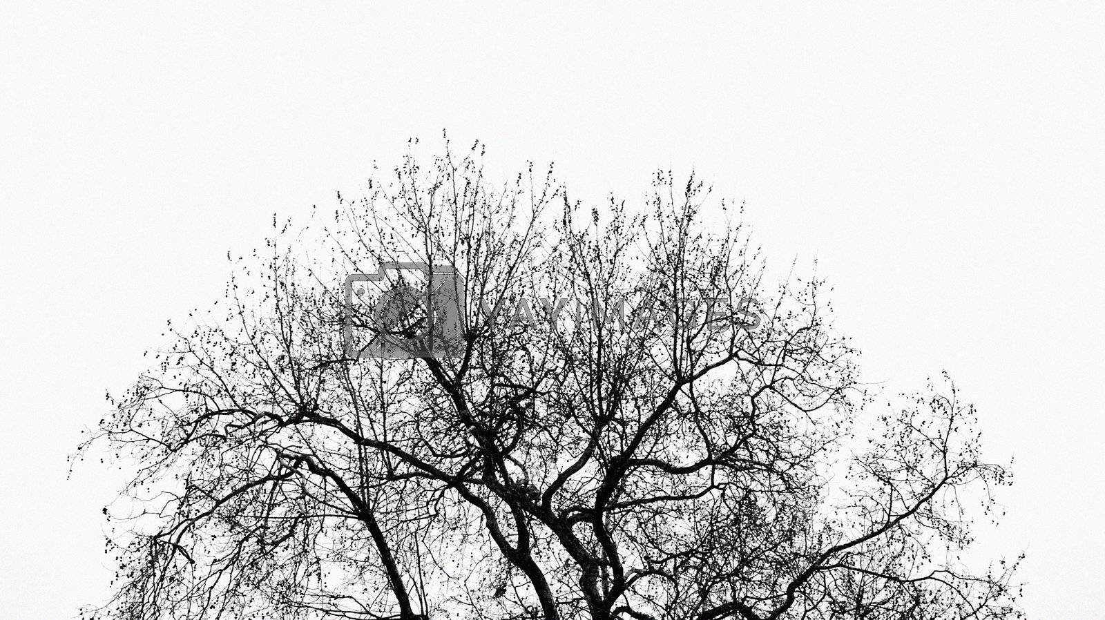 Tree without leaves, abstract nature