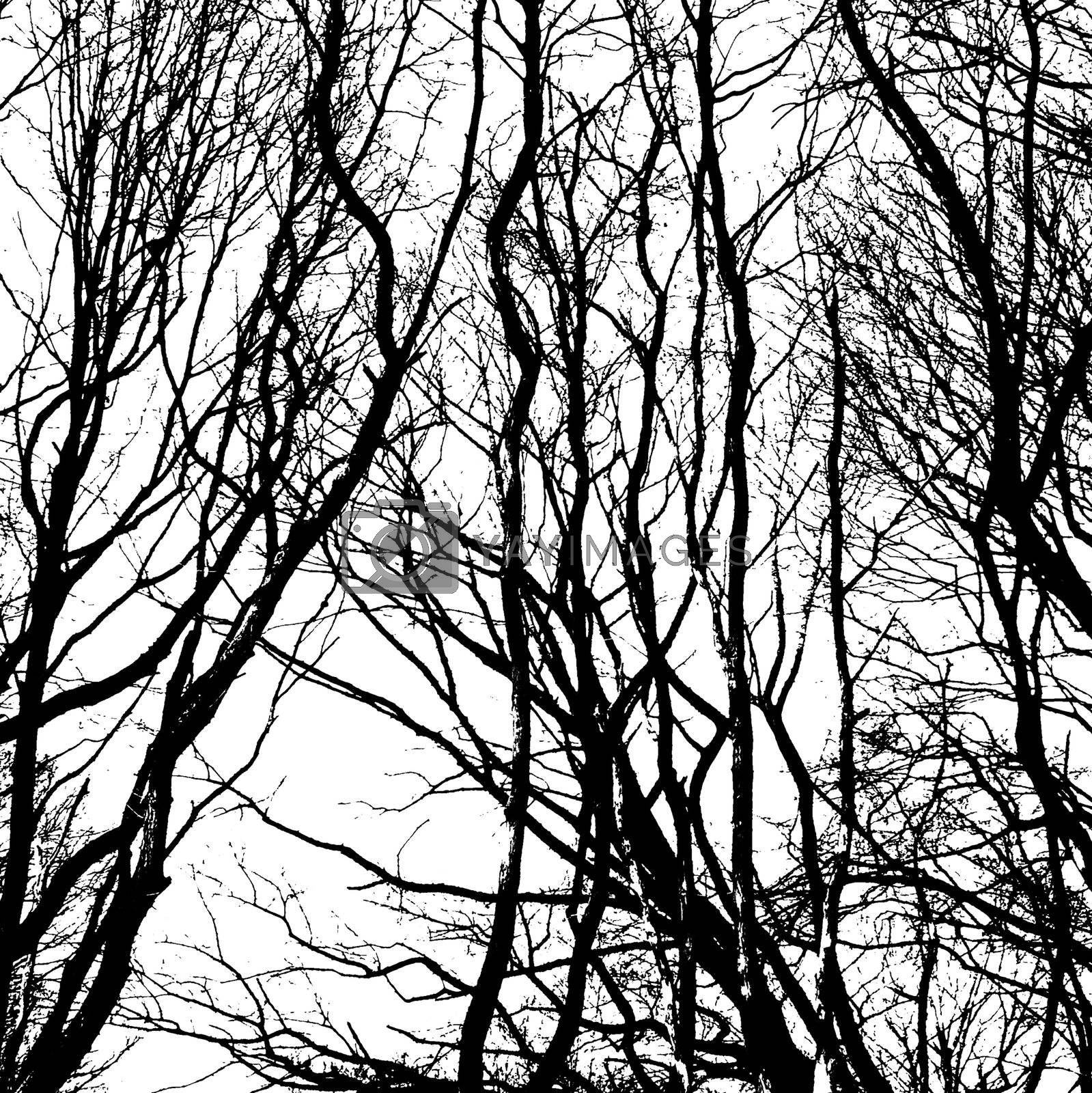 Bare wintry trees in black and white