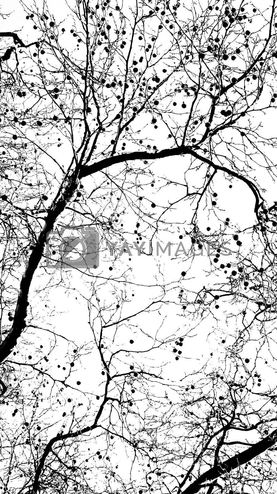Abstract tree, canopy background