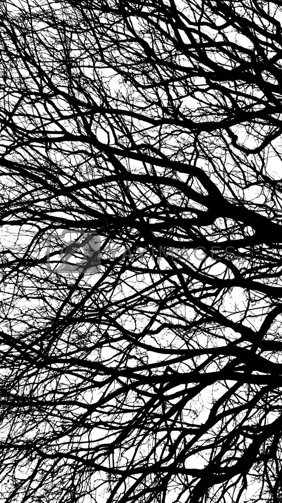 Ancient tree in black and white