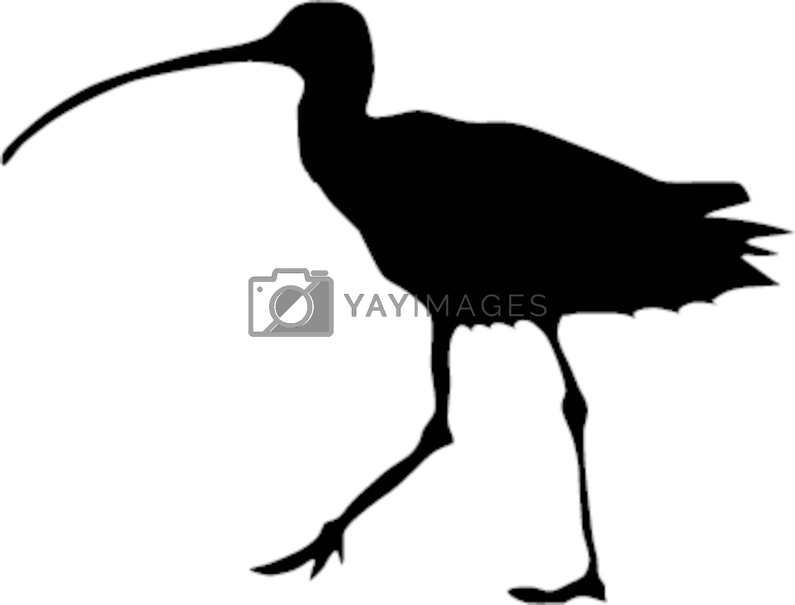 Illustration in style of black silhouette of curlew