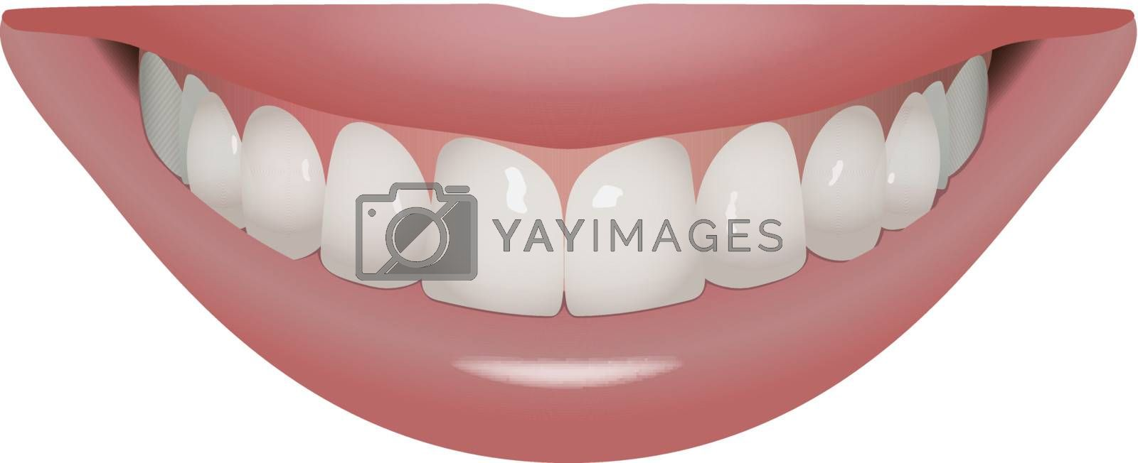 vector beautiful smile with perfect teeth, eps10 vector, transparency and gradient mesh used