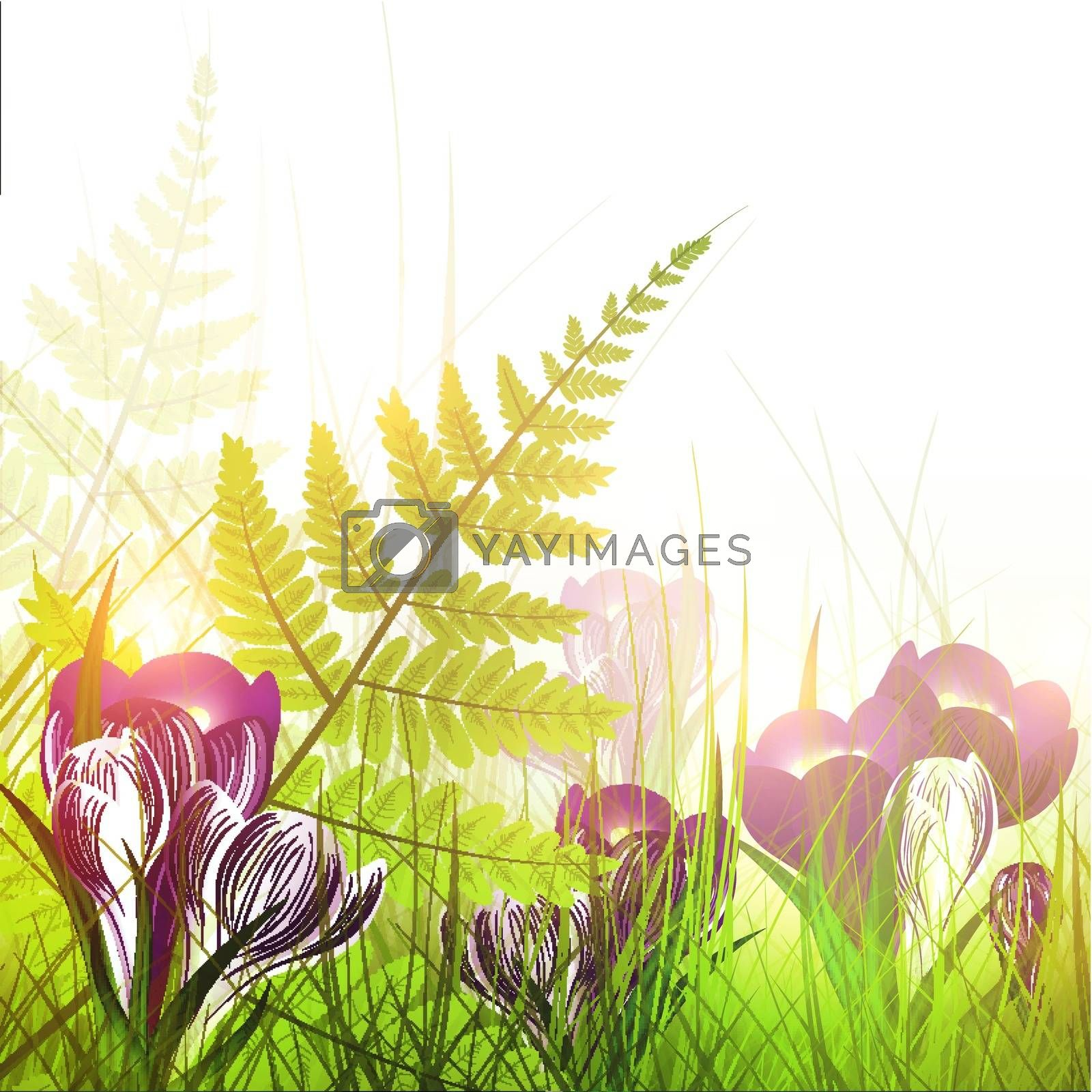 spring meadow with crocus flowers over white background