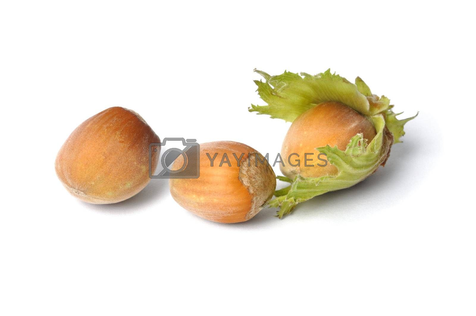 Hazelnuts on White by ajt