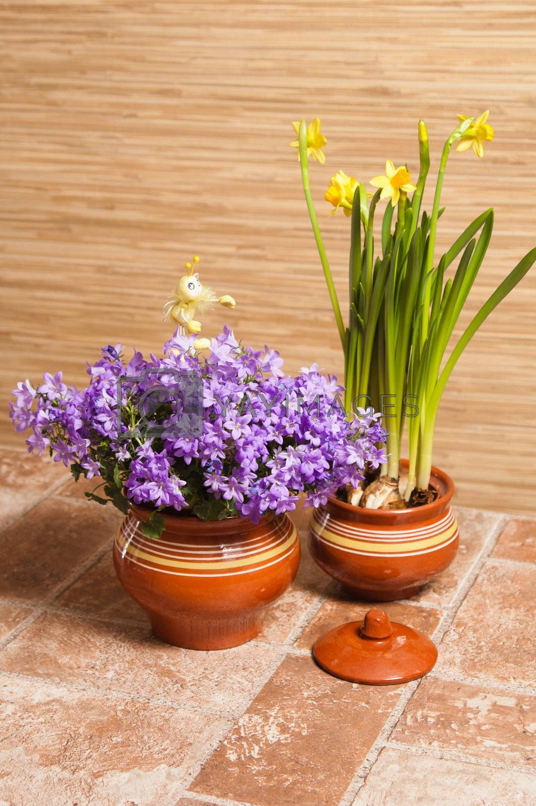 Pots with flowers on a floor, a close up