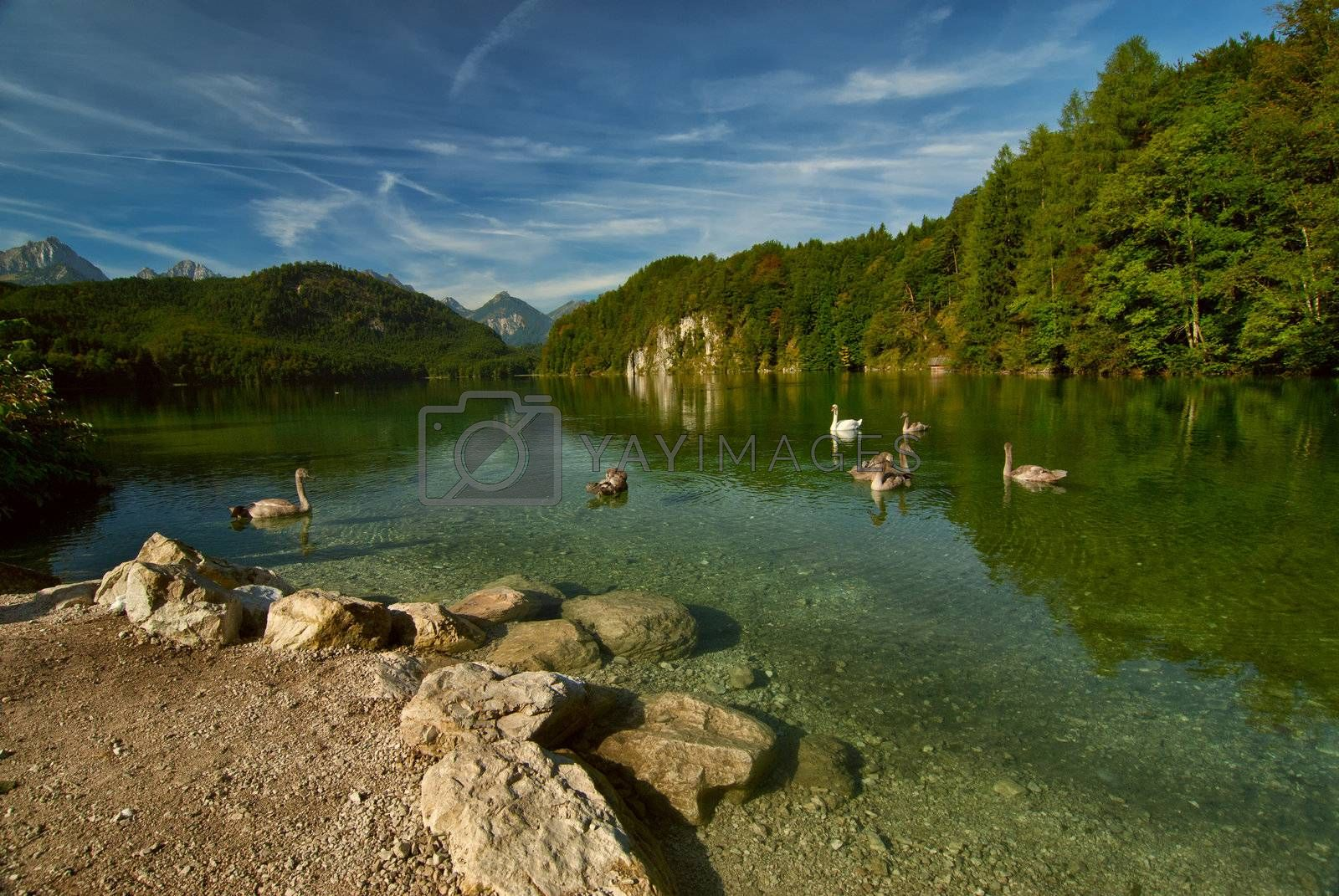 Royalty free image of Landscape with swans, lake and mountains by firewings