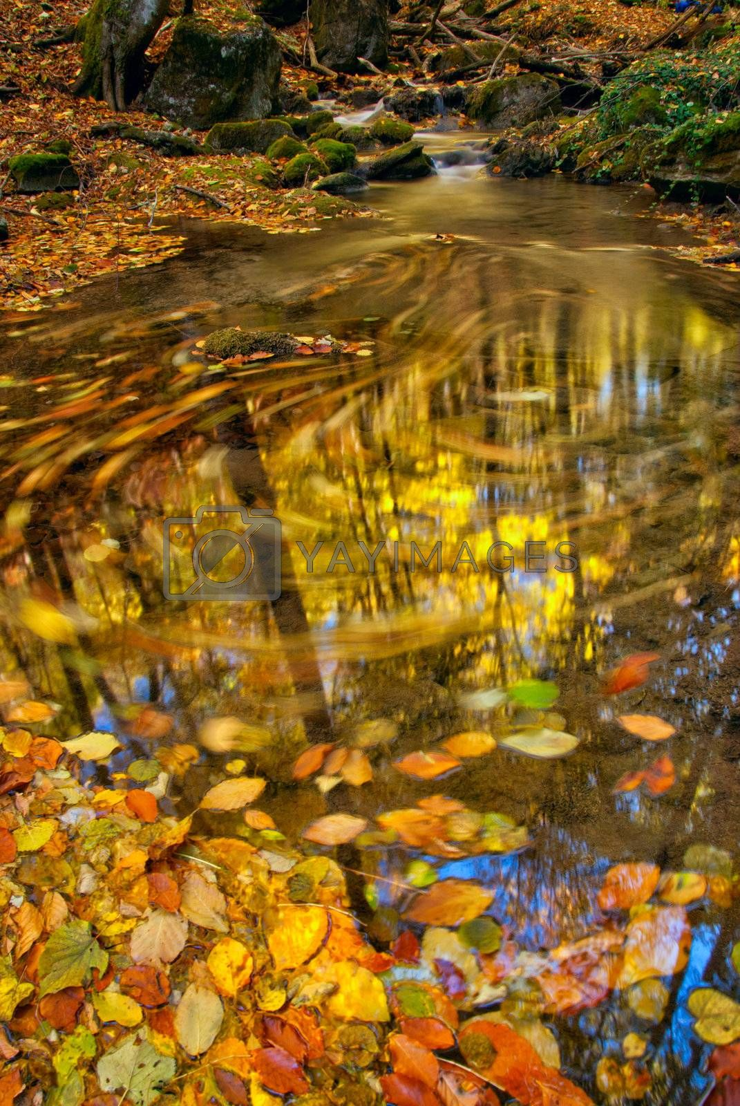 Royalty free image of Autumn stream by firewings