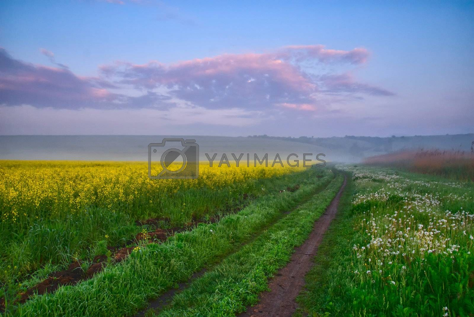Road along a field of yellow flowers