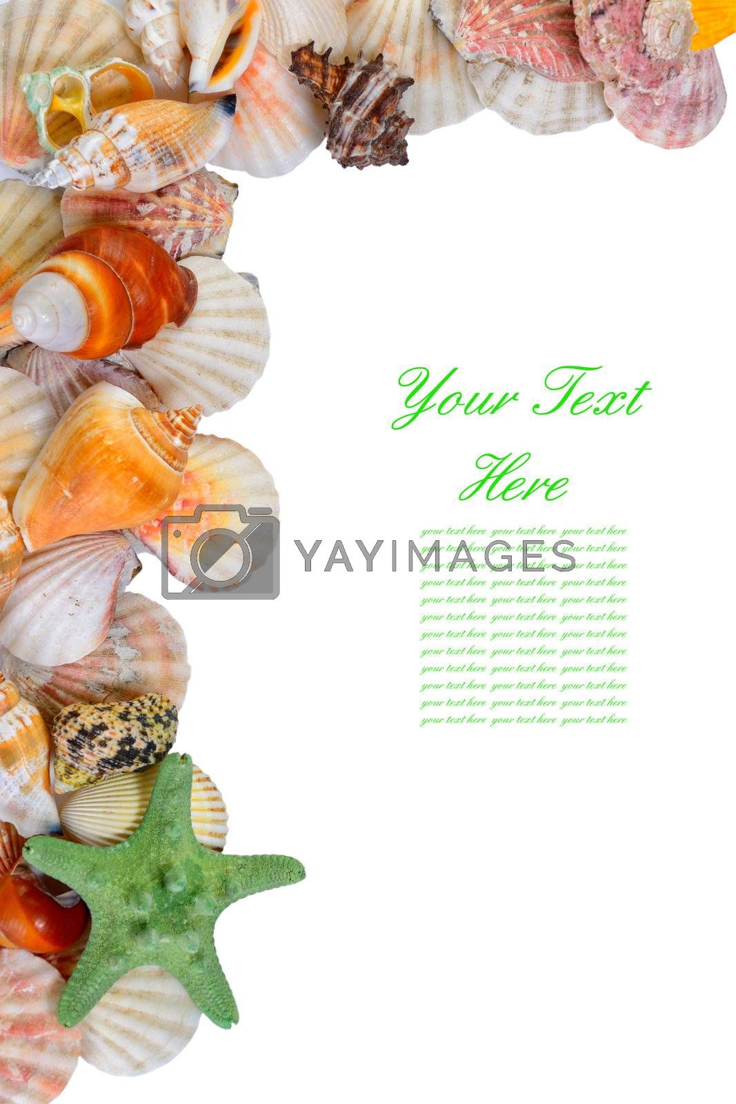 Seashells frame with sample text isolated on white background