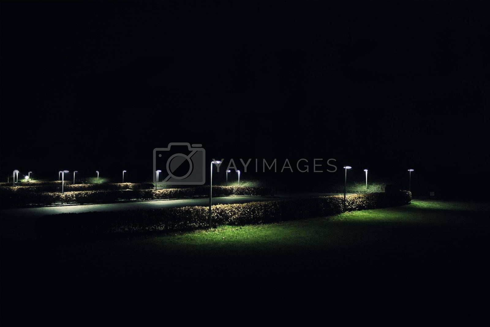 Very nice execution of a photographer, quiet, romantic night in a park in Berlin