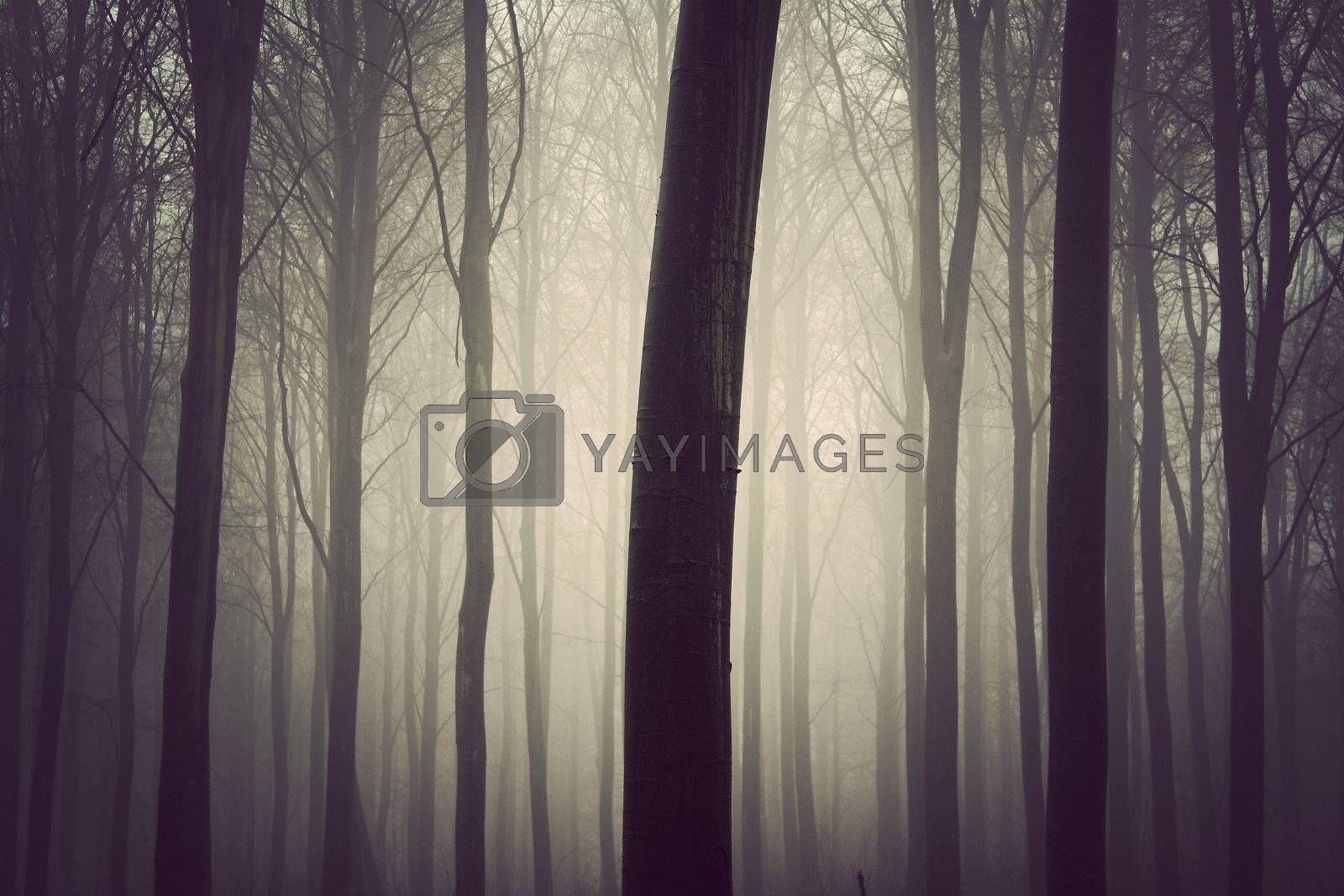 A quiet forest in Russia, a very dark art