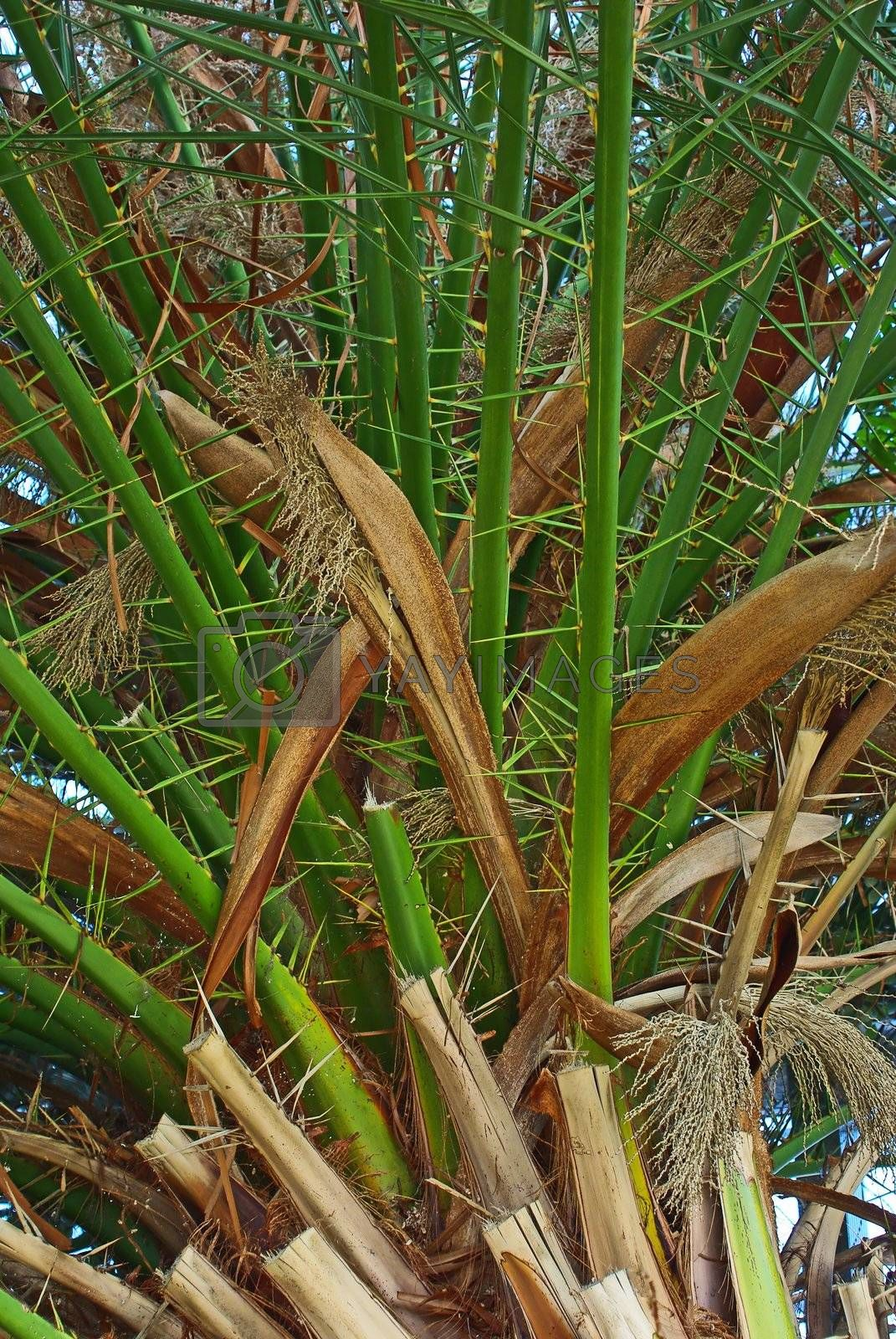 Palm tree in bloom close up image