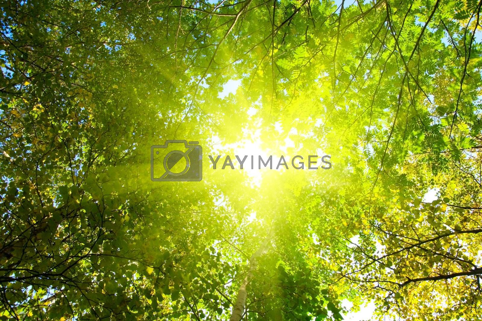 Look below, can be seen as a glimpse of the sun passes through the leaves