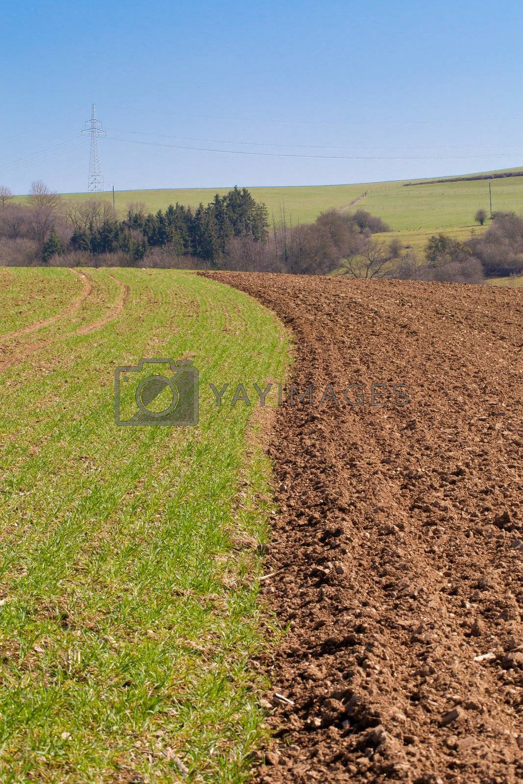 Field in the countryside half desert and grass