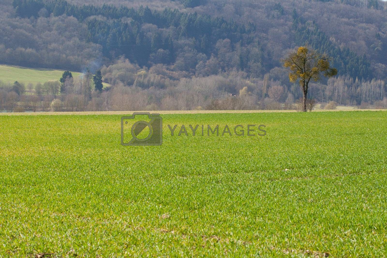 Beautiful landscape in the countryside in Luxembourg