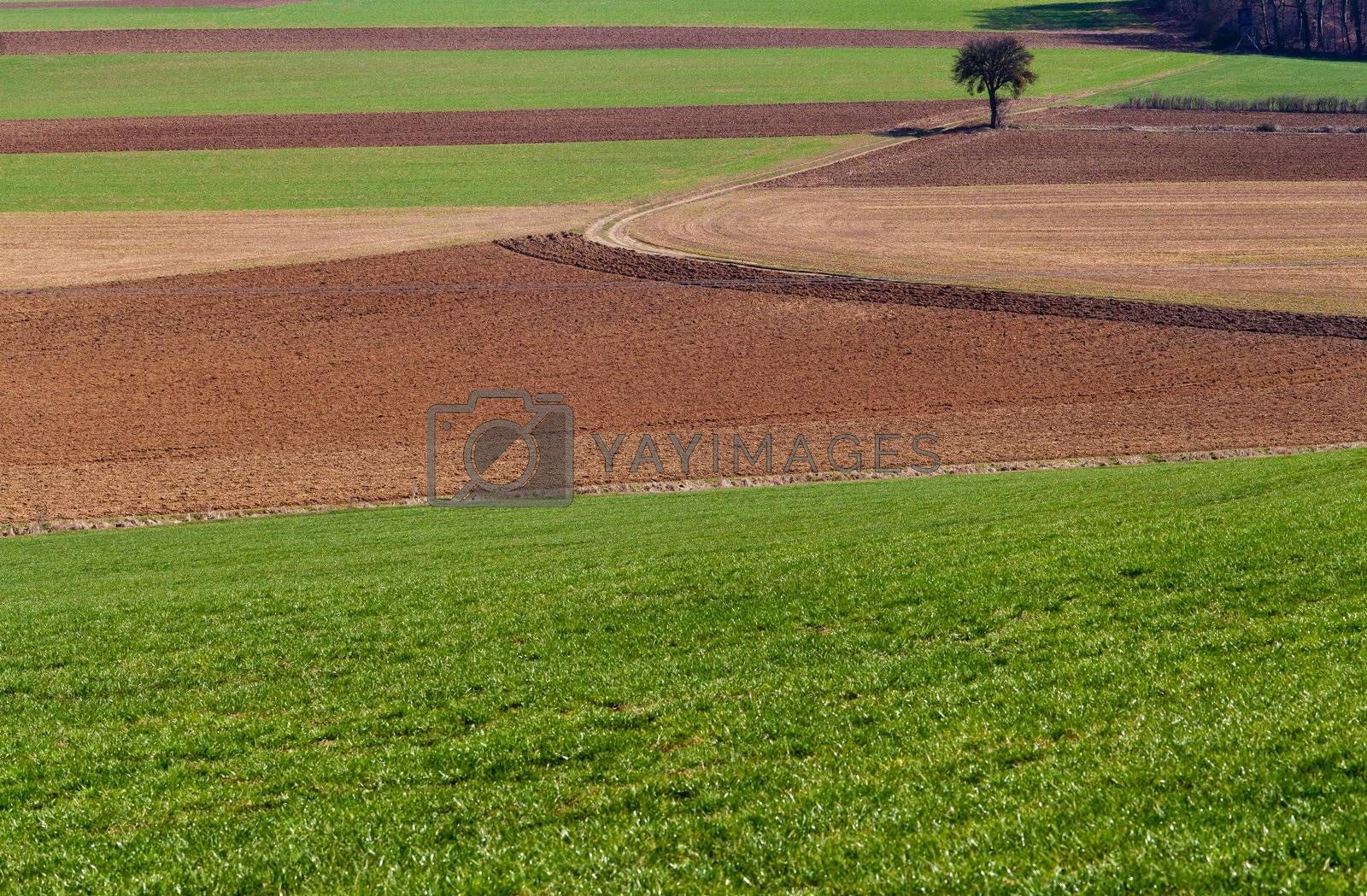 Beautiful countryside background with tree, grass and soil