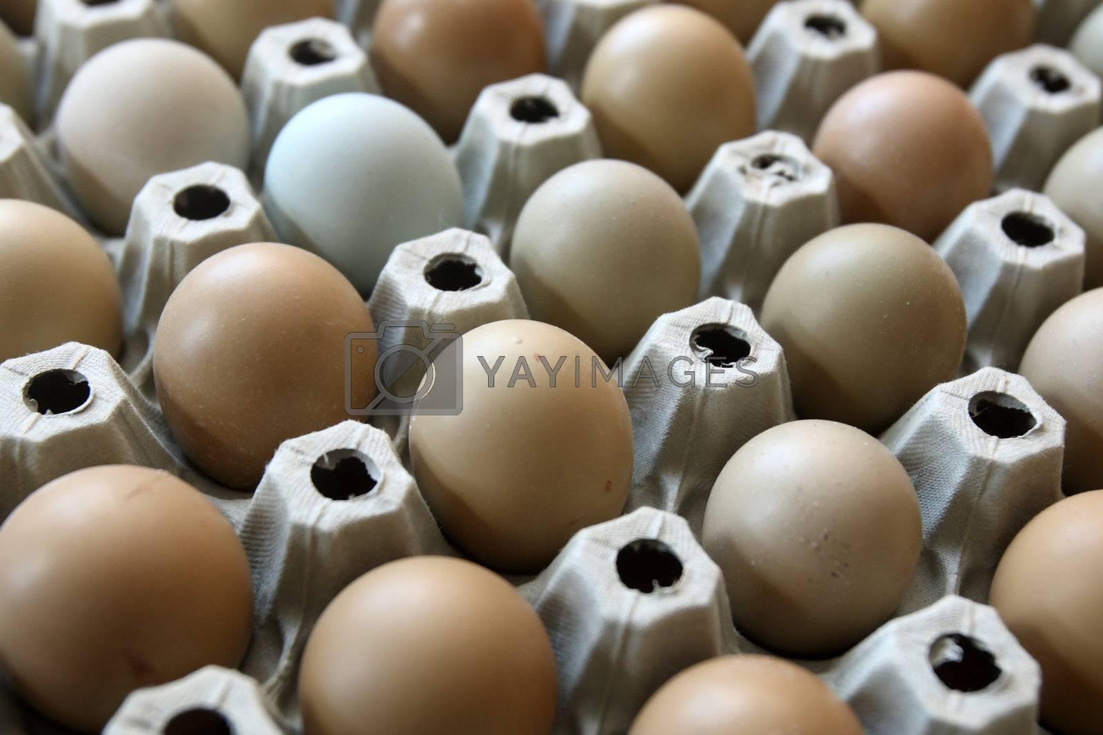 pheasant eggs in carton