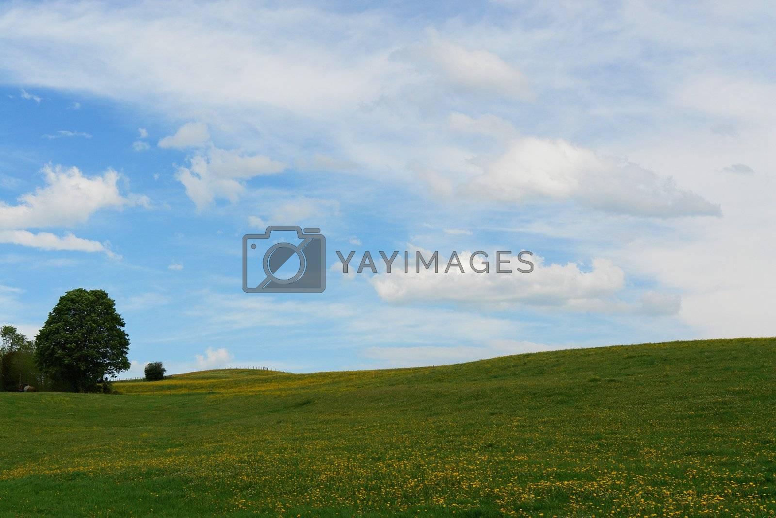a beautiful summer landscape outside in the meadow