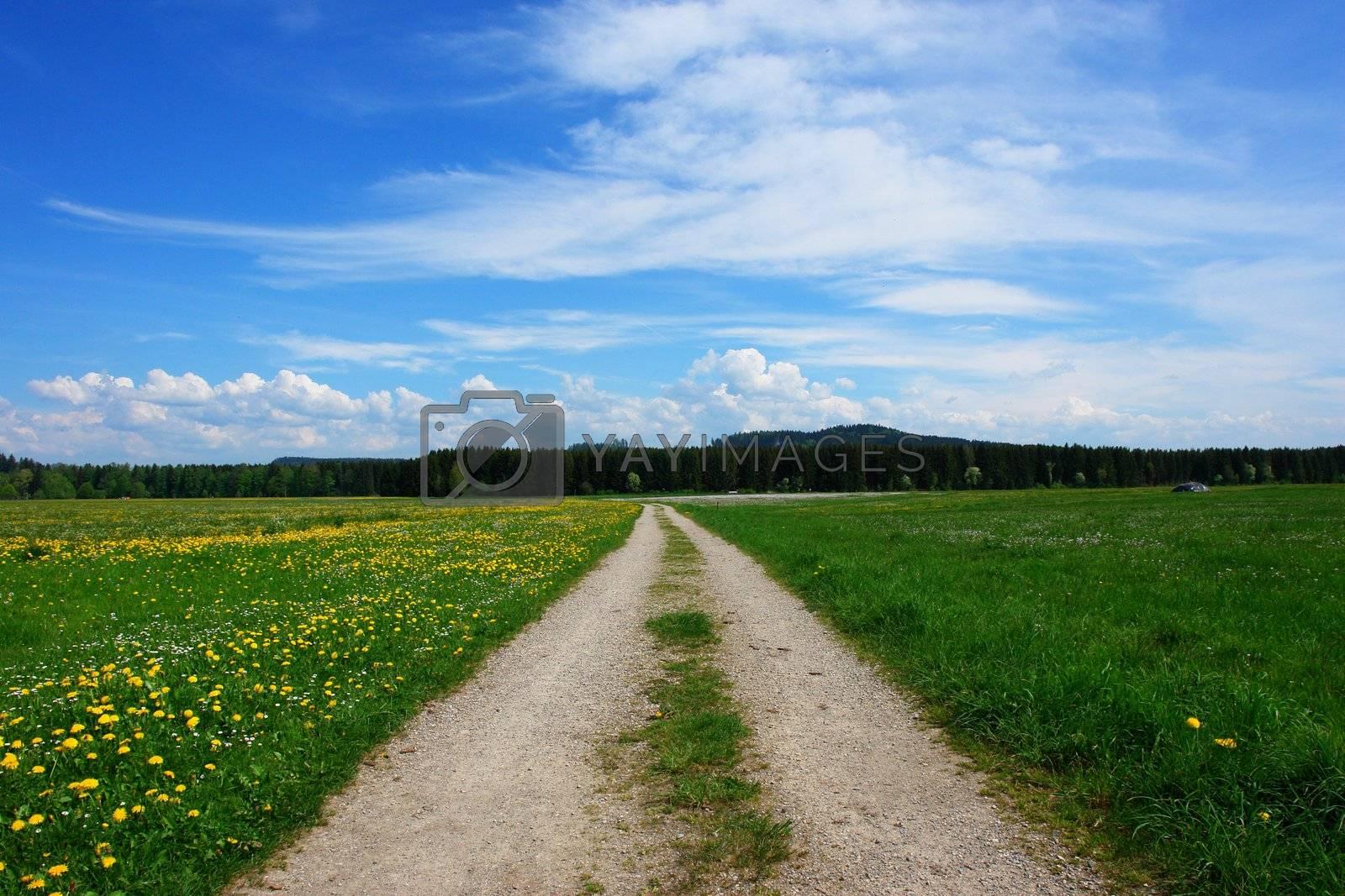 a path through a summer landscape outside