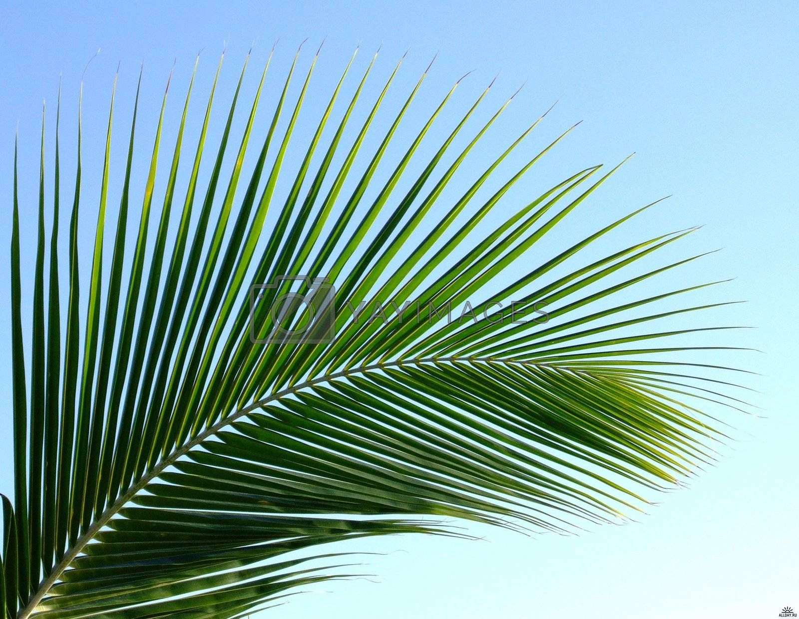 Palm leaf on the beautiful islands of the Maldives
