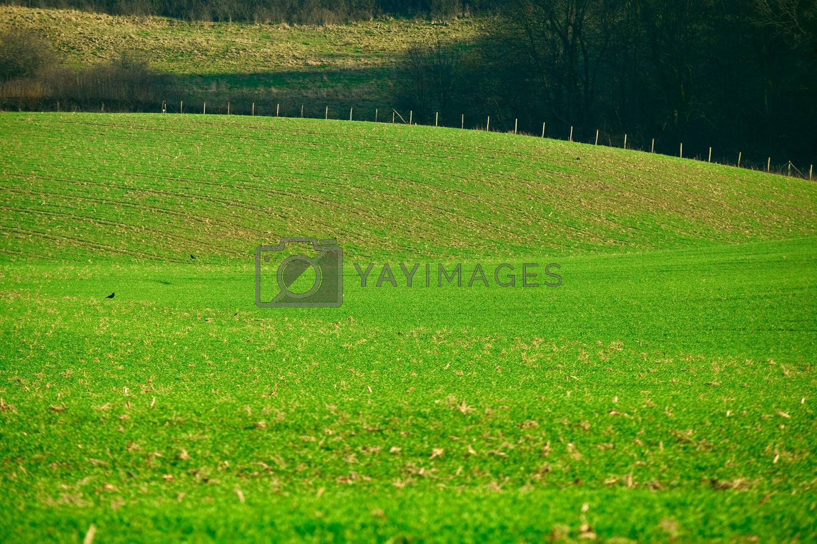 abstract green landscape with hills