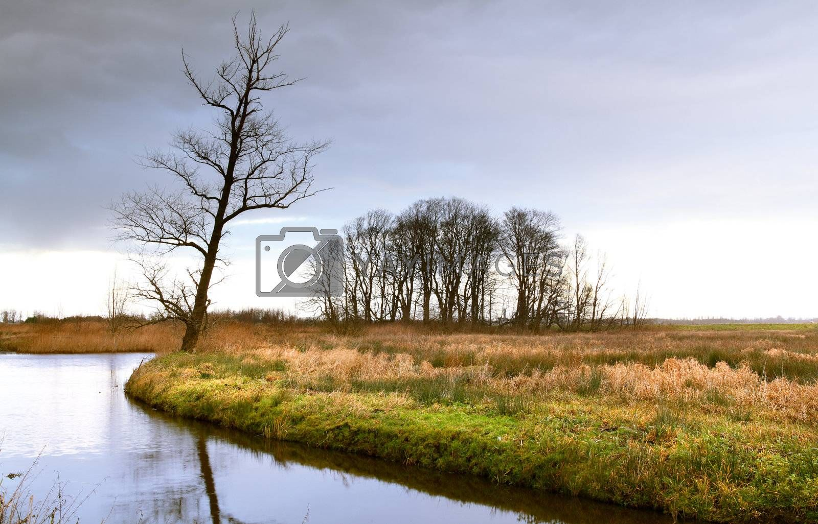 wild landscape with river, tree and cloudy sky
