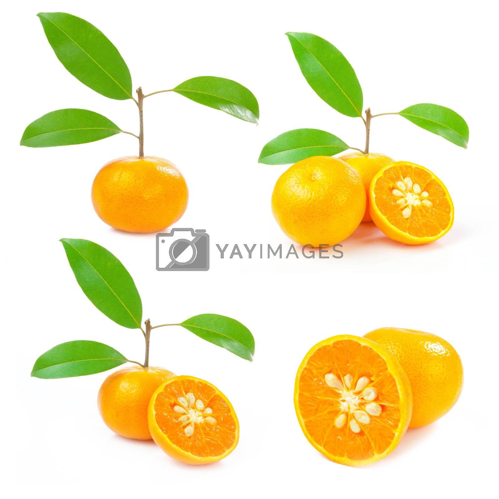 Orange isolated Collection on white background