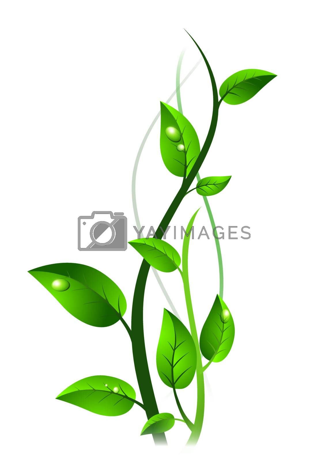 Green sprout with drops at leaves over white background