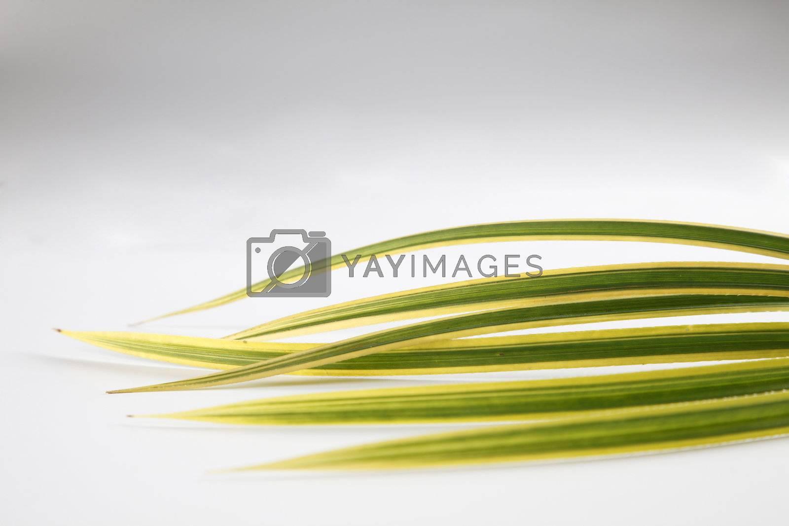 arrangement of leaf on the plain background