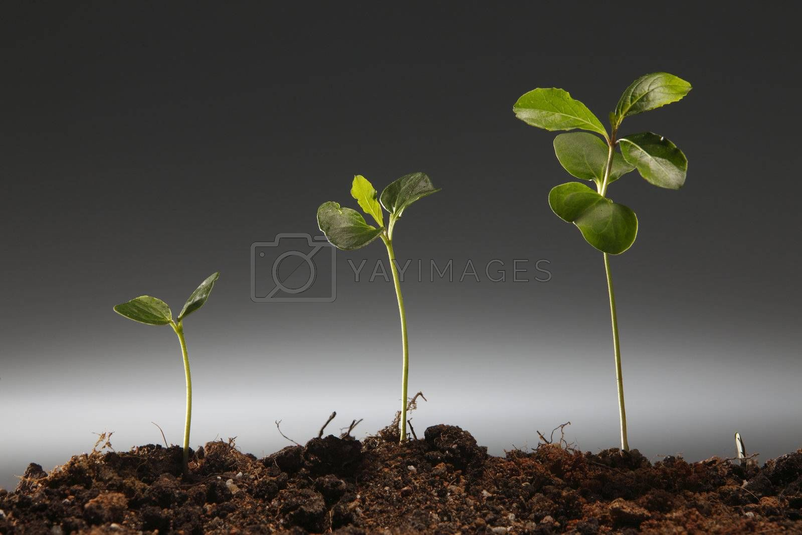 plant is growing in different stage