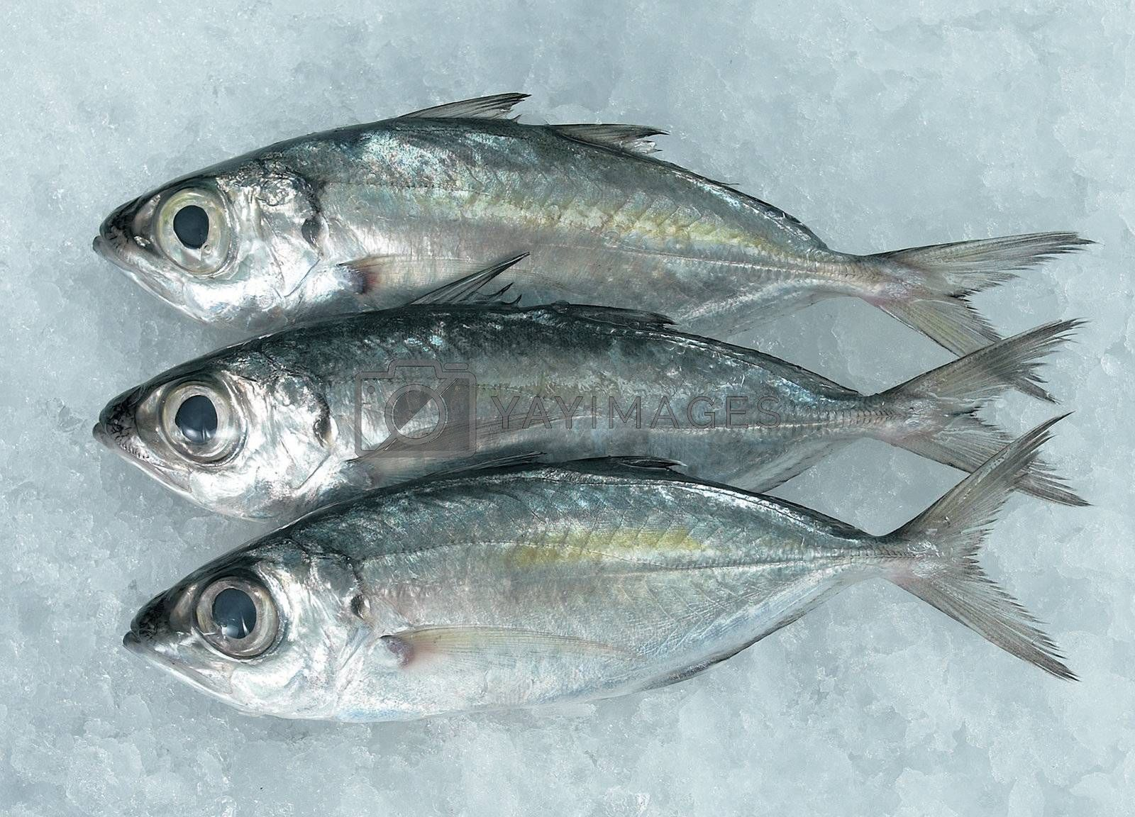 Image series of fishes.