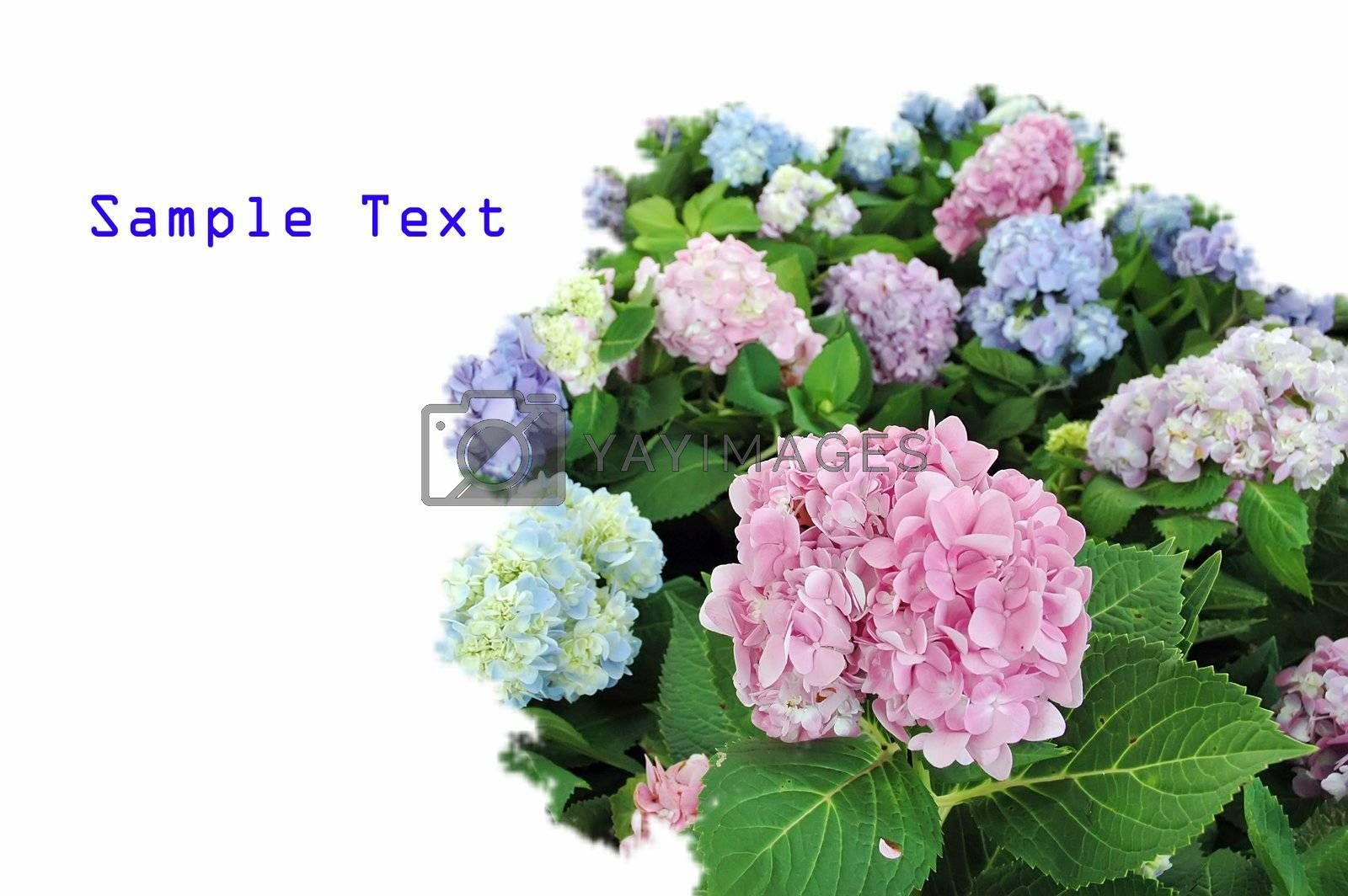 Flowers in the garden with text