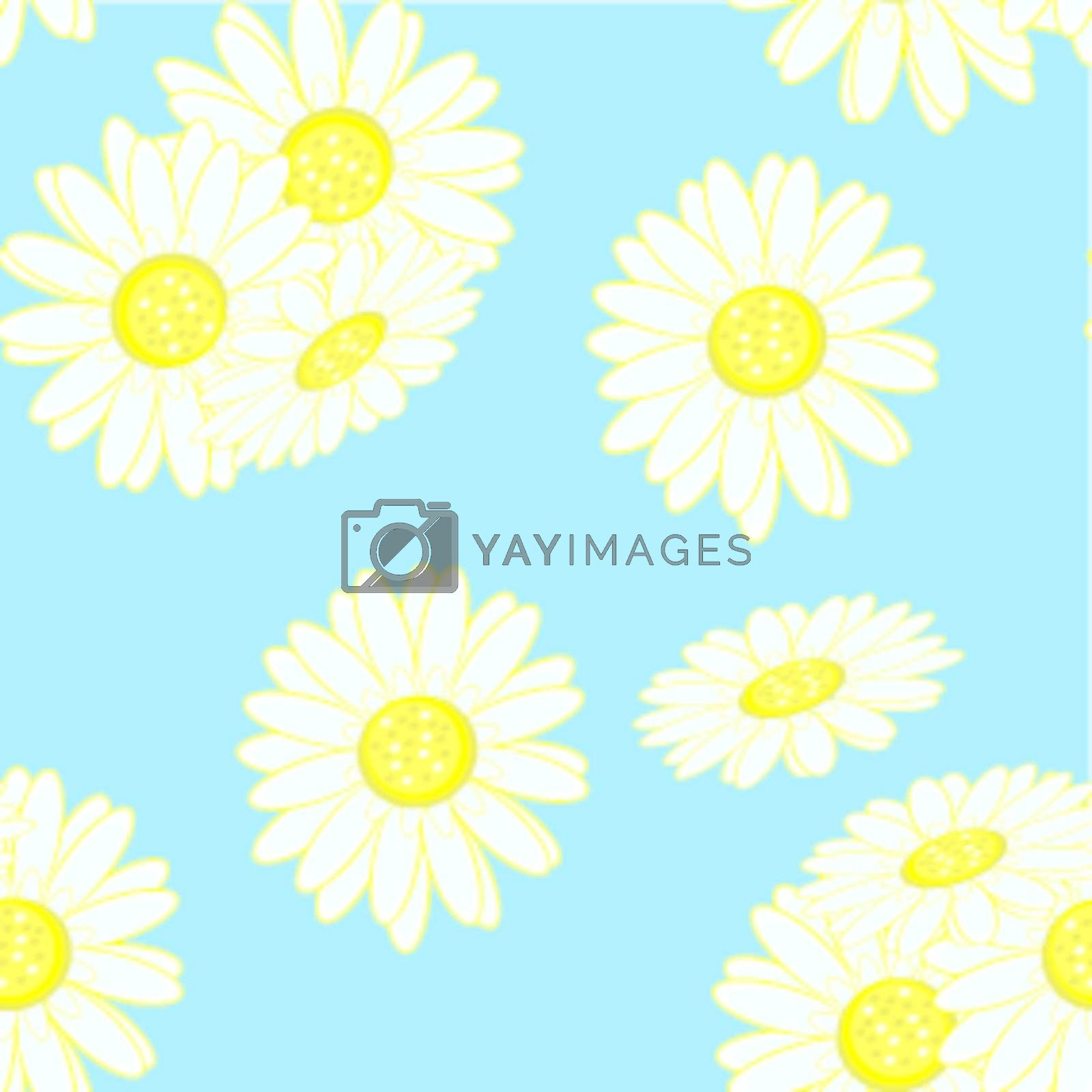 Seamless texture of chamomile. Illustration of the designer on blue background