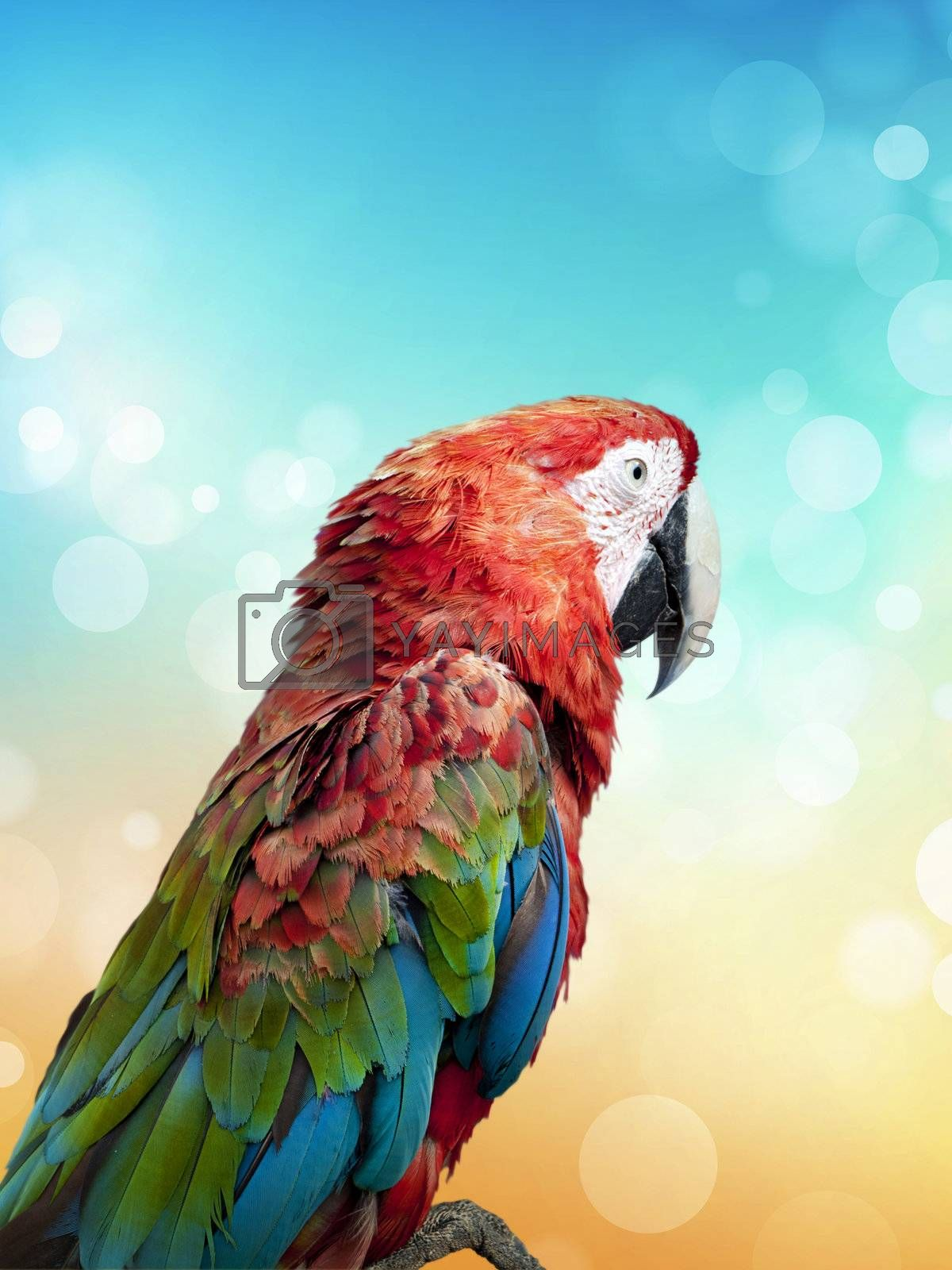 colorful parrot over bright summer background