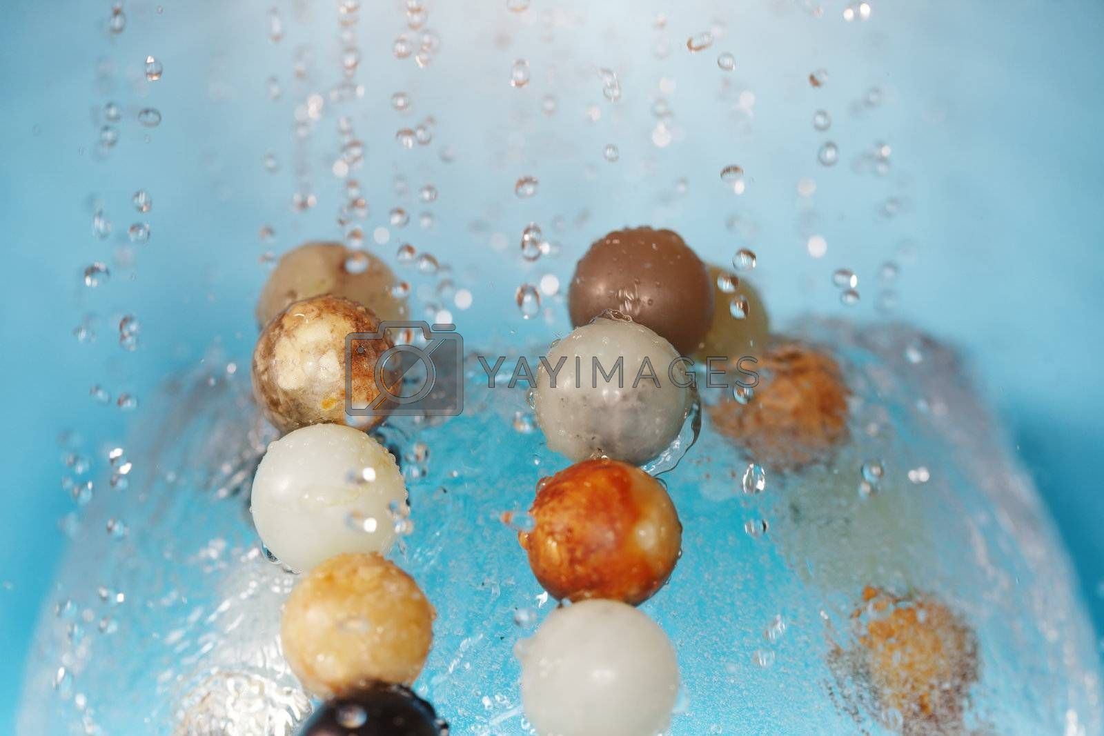 Extremely close-up macro photo of chaplet under the falling water drops. Shallow depth of field for natural view