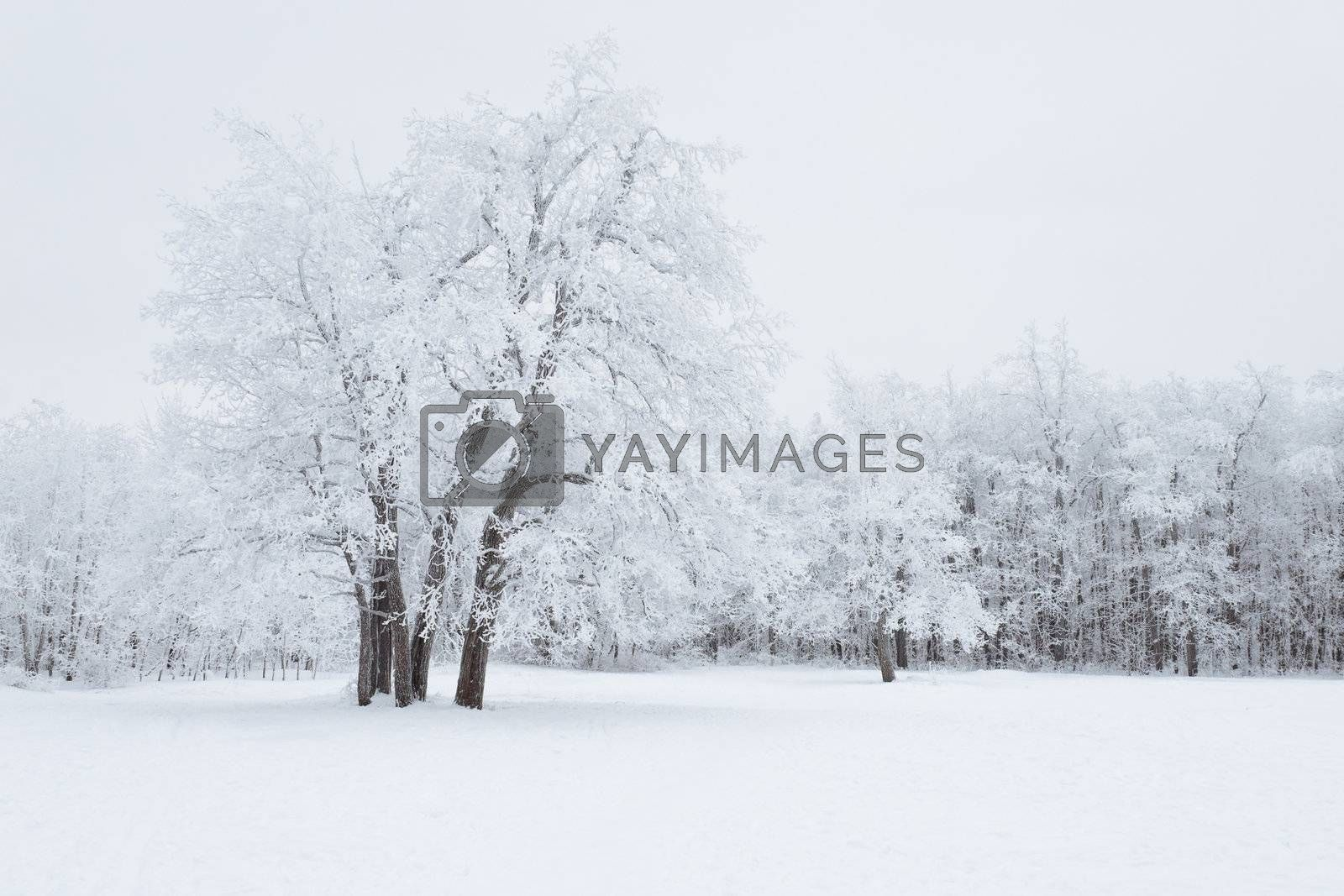 View of Trees Covered by Snow