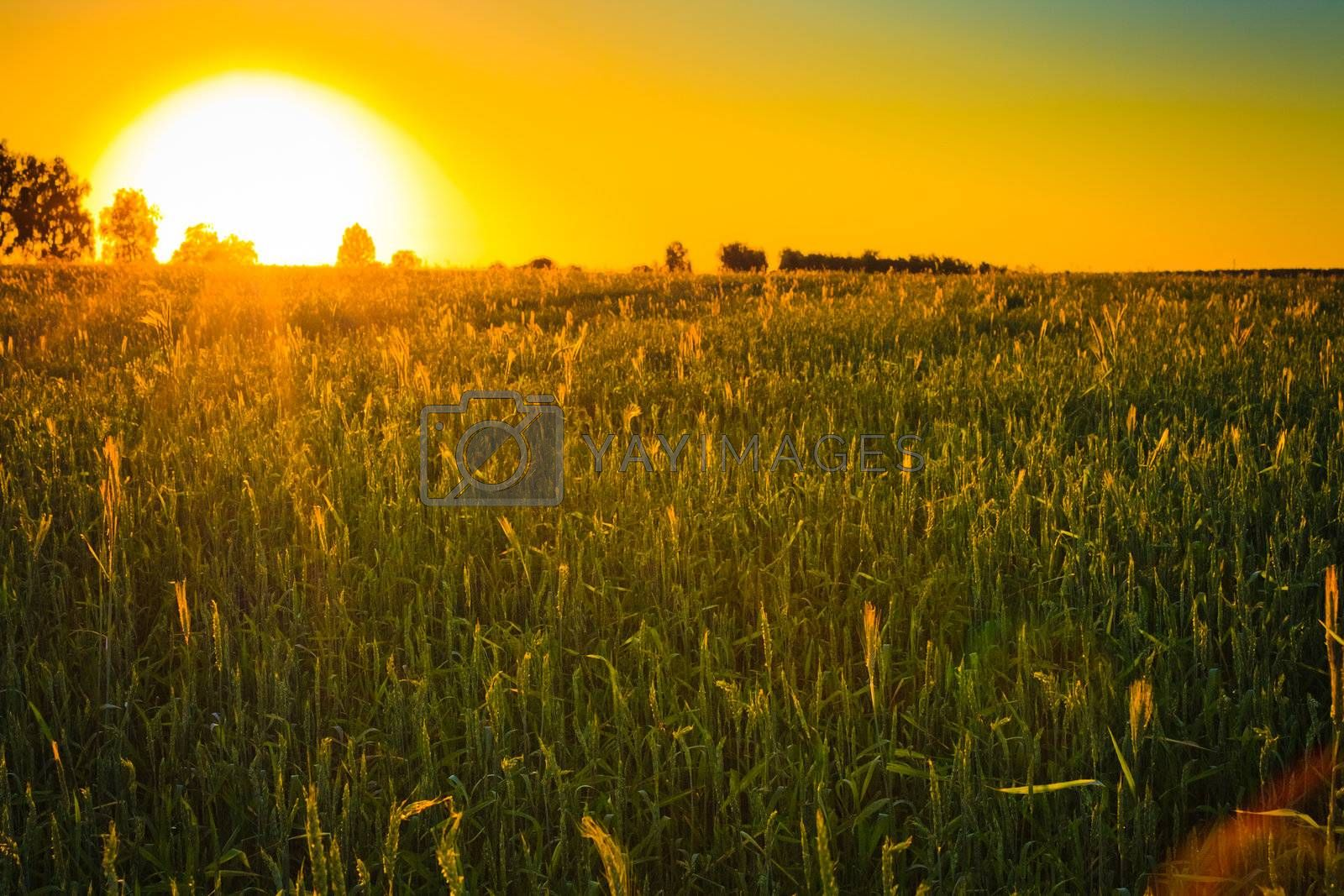 Agricultural plants on field with sunlight