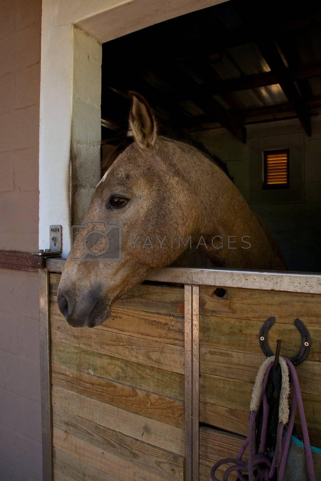 Horse inside stable,