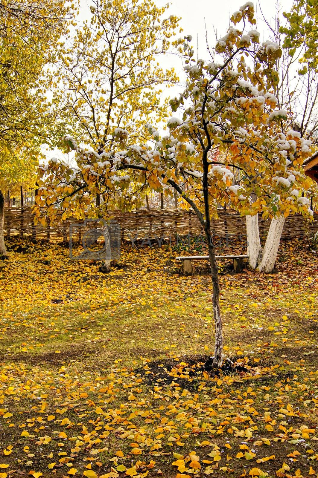 Autumn time: colorful leaves of the tree covered with snow