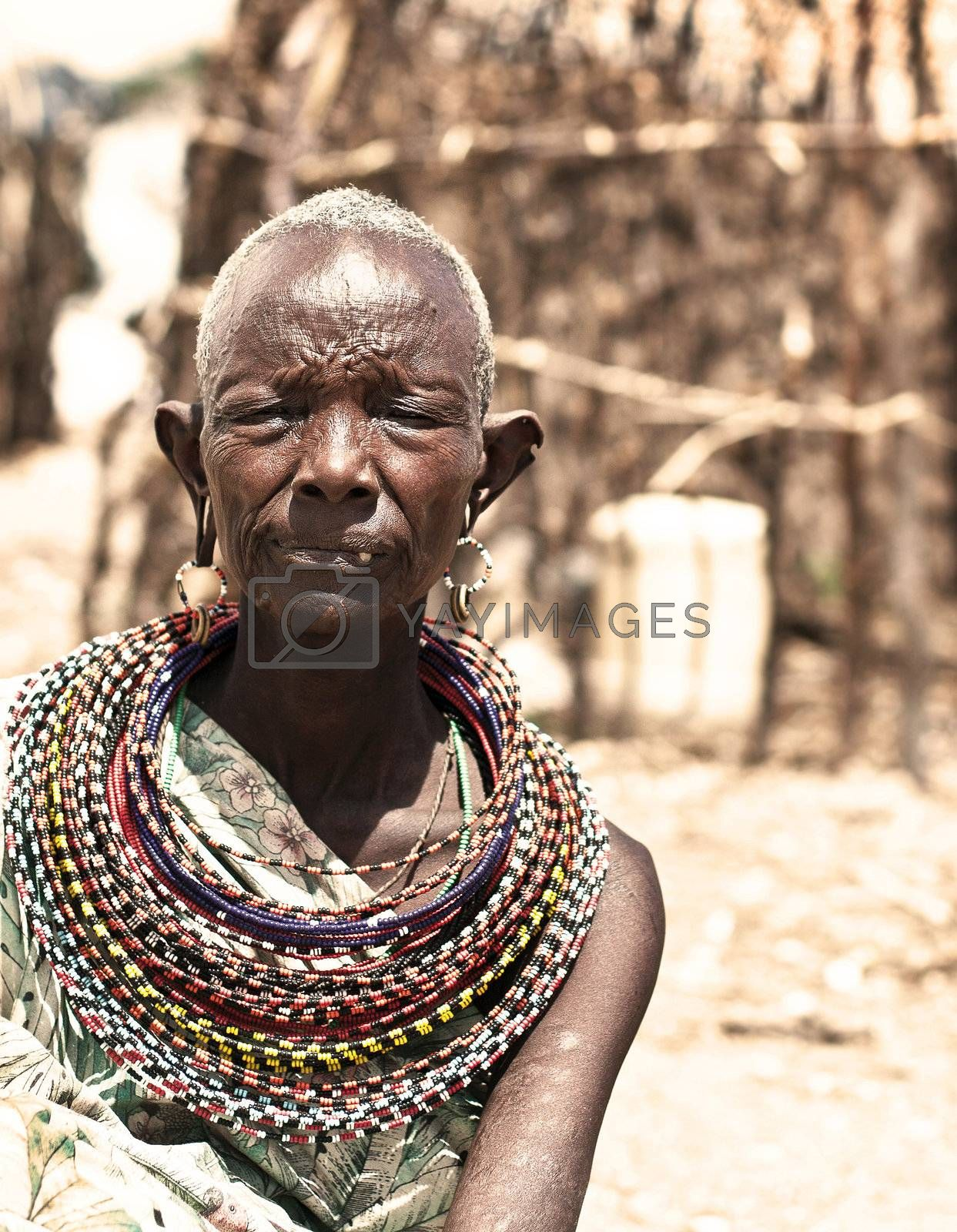 SAMBURU, KENYA - NOVEMBER 8: portrait of unidentified African tribal lady, wears handmade cultural accessories for traditional dance on November 8, 2008 in tribal village near Samburu National Park Reserve, Kenya.