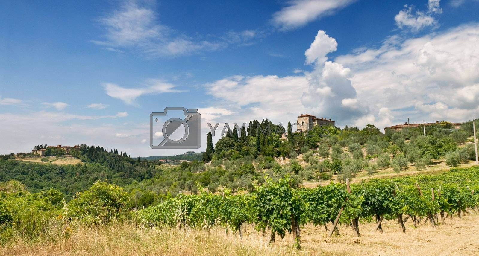 Tuscany Villa in Umbria, Italy, surrounded by wine and a summer landscape