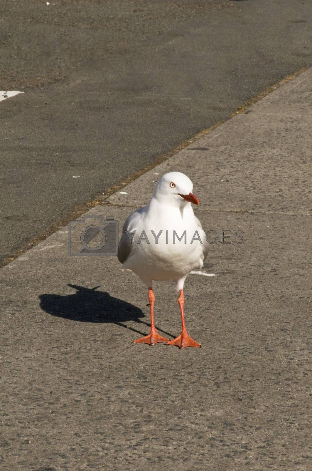 Curious seagull in the summer sun