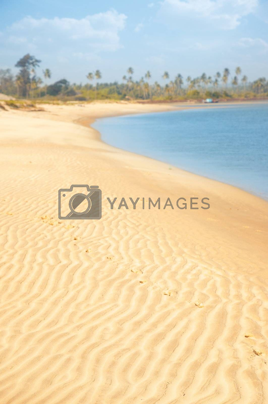 Vertical photo of the sandy beach at the ocean with palms on a background. Vibrant colors
