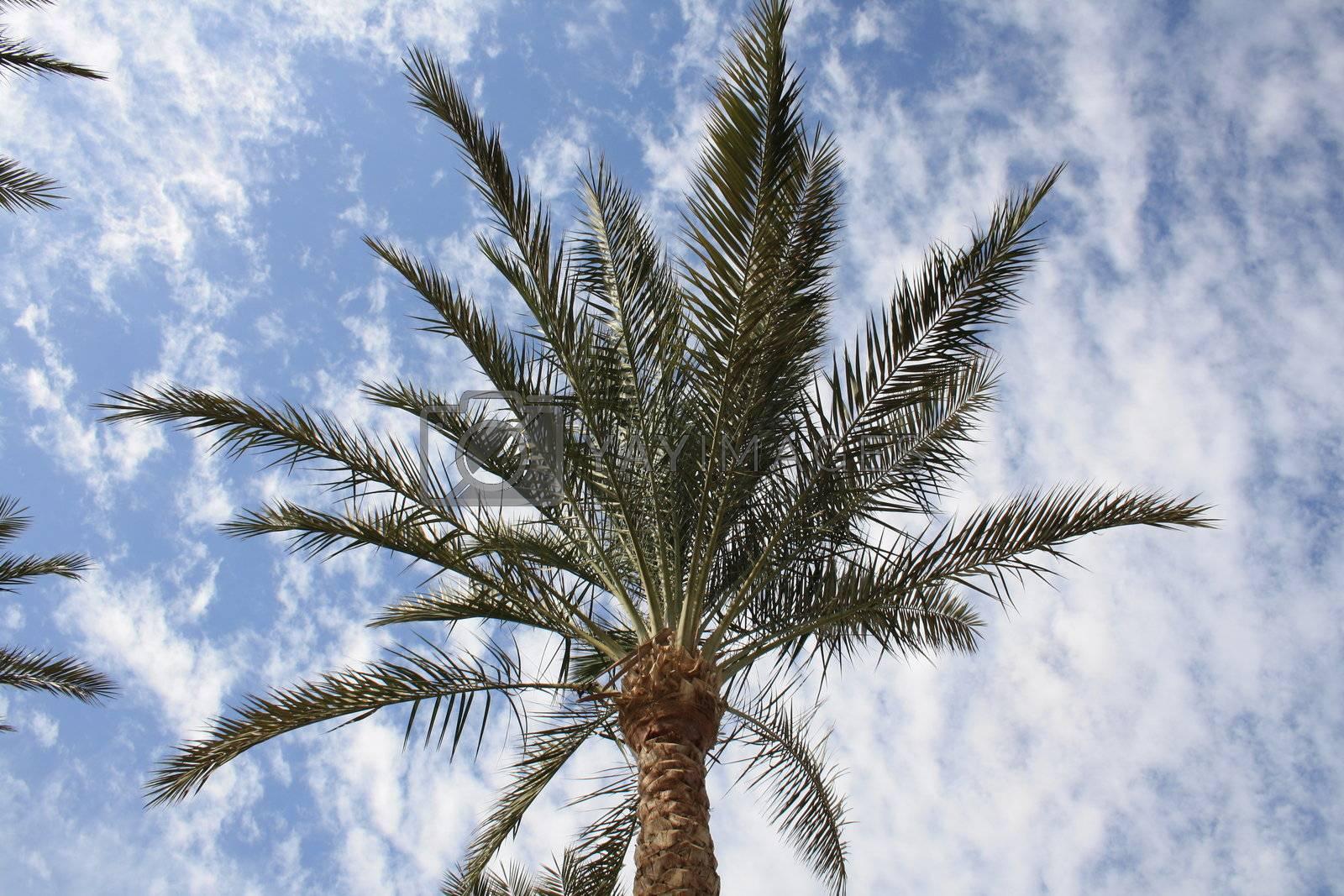 beautiful palm trees in the long seaside resort