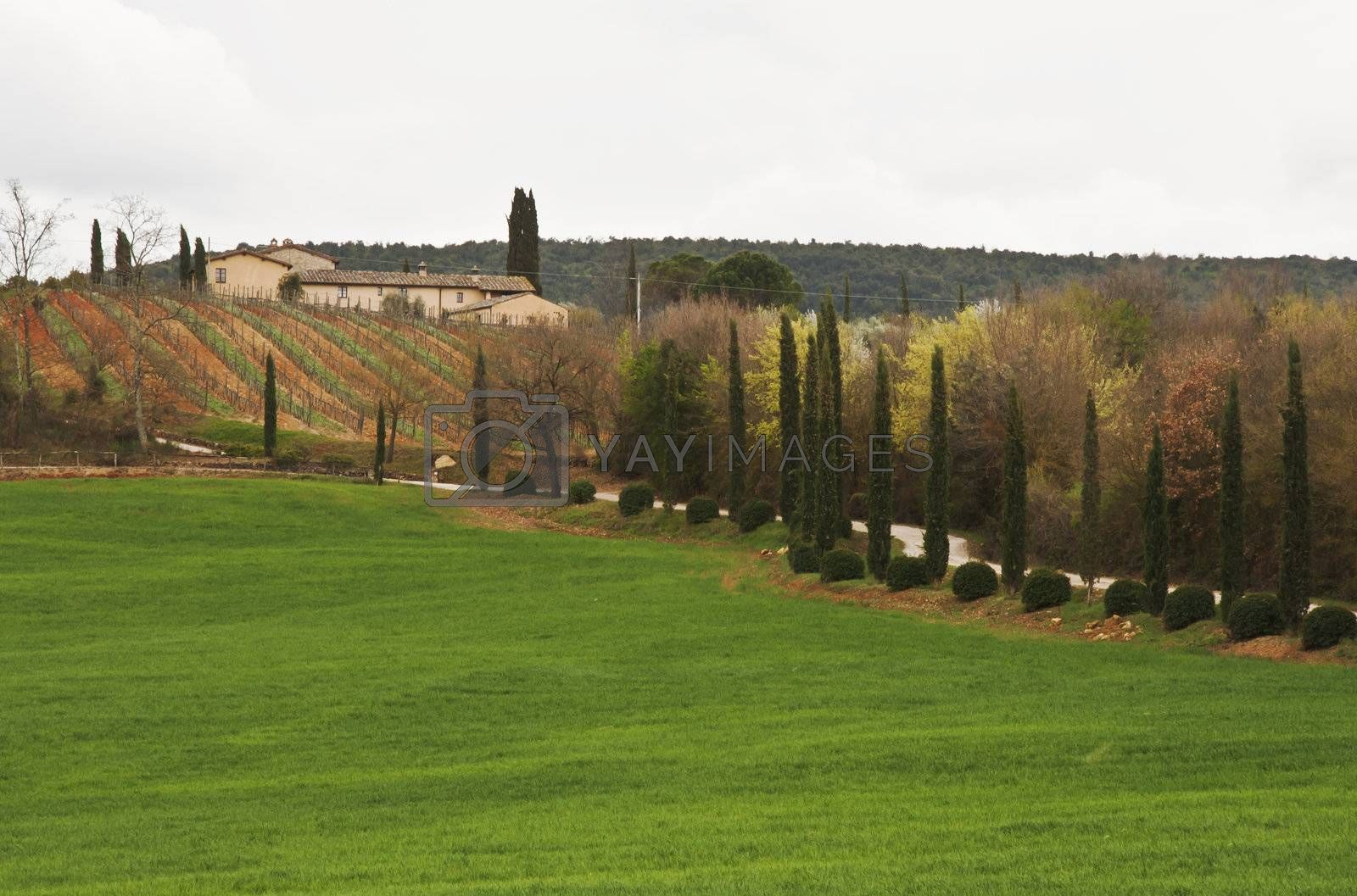fram and road to the hill in tuscan countryside, Italy