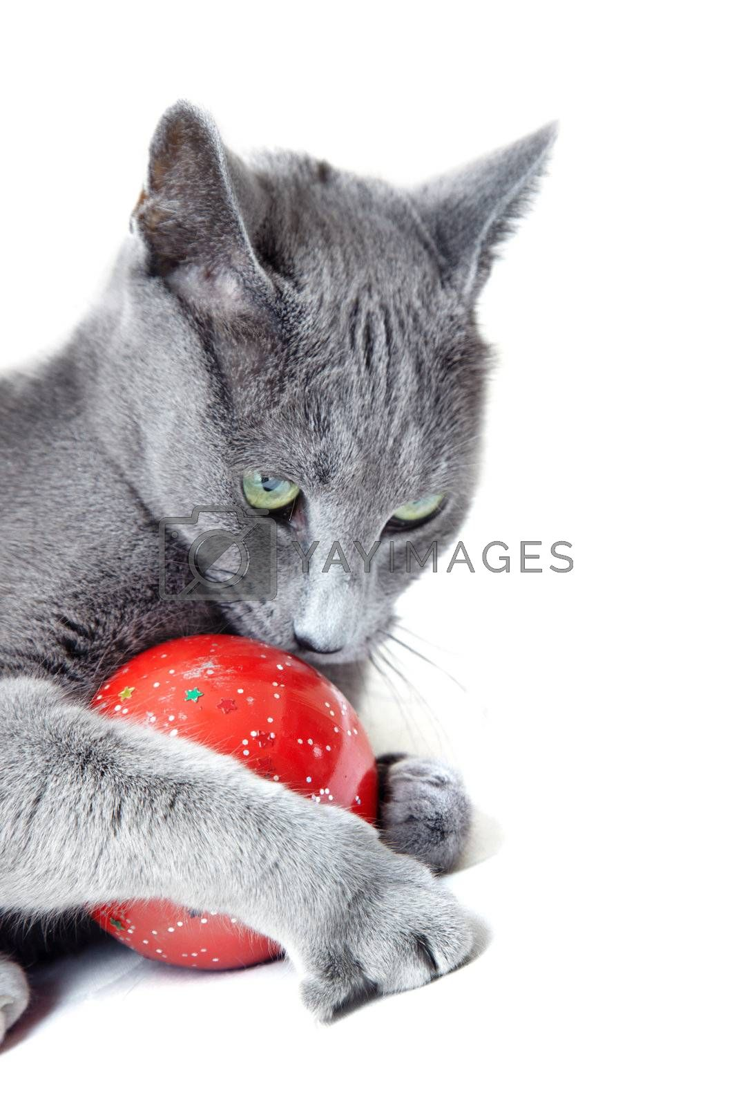 Cat playing with Christmas toy on a white background