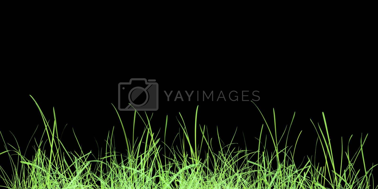 Green grass meadow over black background